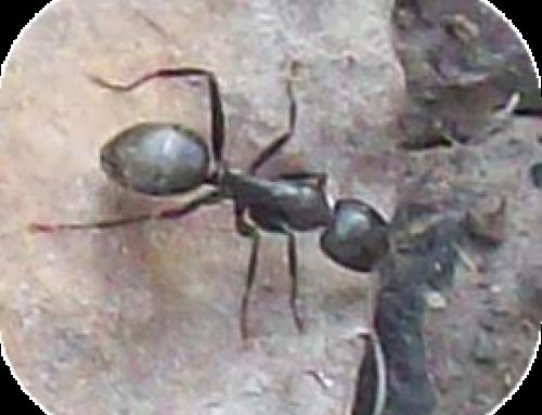 Bug-Themed Speech and Language Activities