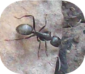 ant, bug